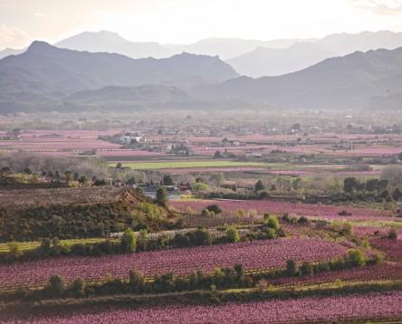 Imatge de la noticia Natura, esport, festa i cultura aquesta Setmana Santa a la Ribera d'Ebre, en els últims dies de la floració
