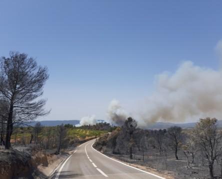 Imatge de la noticia La Ribera d'Ebre analitza les conseqüències de l'incendi mirant cap al futur