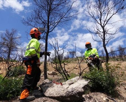Imatge de la noticia Un any després de l'incendi, la Ribera demana més esforços perquè els pagesos puguin viure de la terra