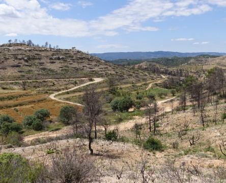 Imatge de la noticia Ribera demana la continuïtat dels Plans d'Ocupació per a la neteja i desbrossat de la zona cremada fa dos estius