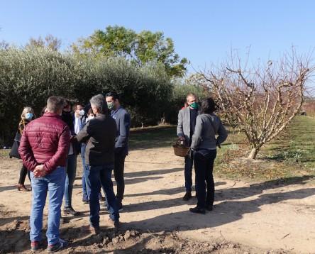 Imatge de la noticia Els productors de fruita dolça de la Ribera d'Ebre impulsen una prova pilot per introduir el cultiu del kiwi