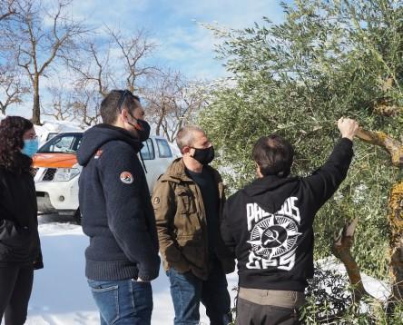 Imatge de la noticia Els pagesos de l'oli de la Ribera d'Ebre comencen a avaluar els danys del temporal Filomena
