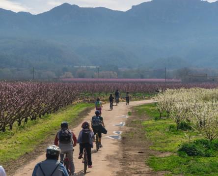 Imatge de la noticia Torna la 'Ribera en flor' amb deu experiències turístiques per la Ribera d'Ebre