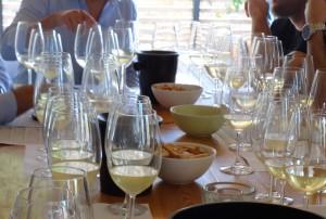 El nou vi de la Ribera d'Ebre serà un vi blanc jove, amb una base de macabeu, la varietat més arrelada a la comarca.
