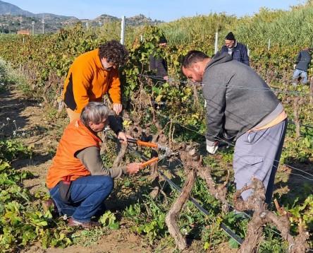 Imatge de la noticia El Consell forma deu alumnes per millorar la professionalització el sector agrari de la Ribera d'Ebre